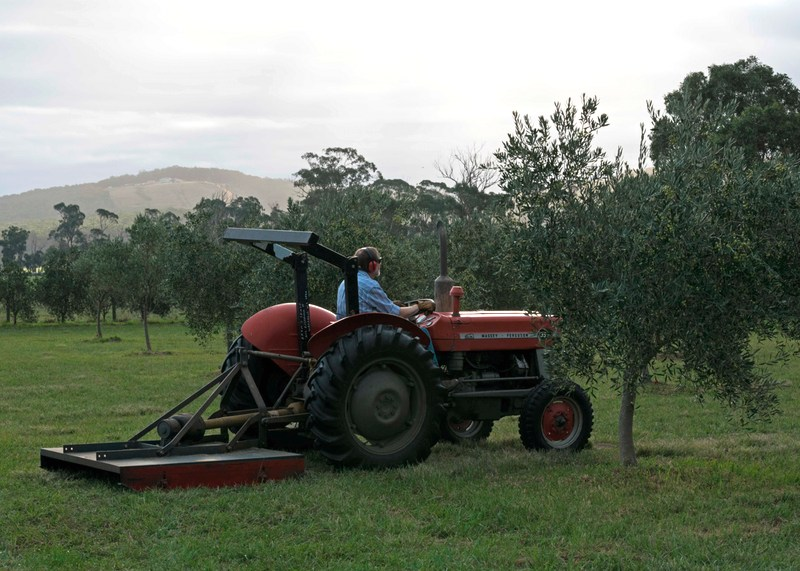 Chris McCallum on tractor at Devon Siding olive grove